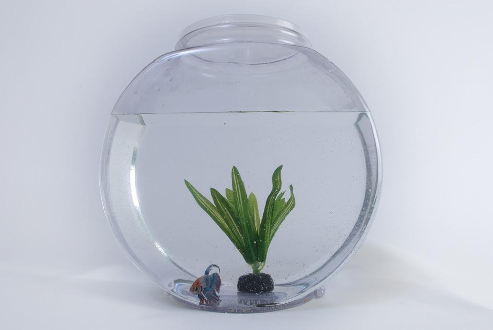 Fish, Tank, Aquarium, Water, Aquatic, Glass, White, Pet