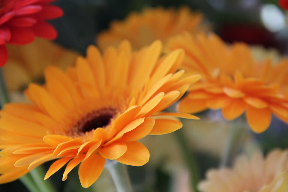 Flower, Tanning Ara, Orange