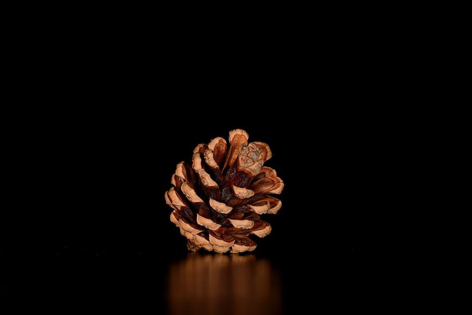 Pine Cone, Tap, Pine Cones