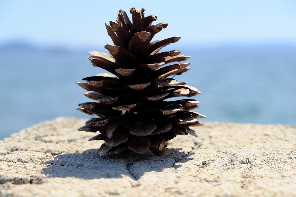 Pine Cones, Sea, Tap, Mediterranean, Beach, Rock, Water