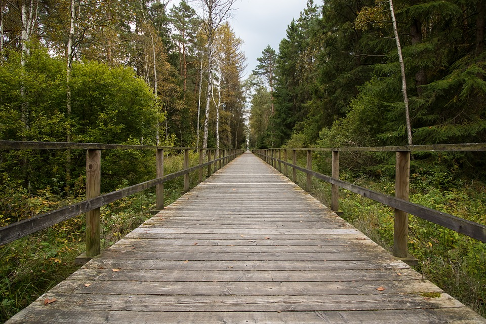 Away, Web, Moor, Target Just, Wooden Track, Forest
