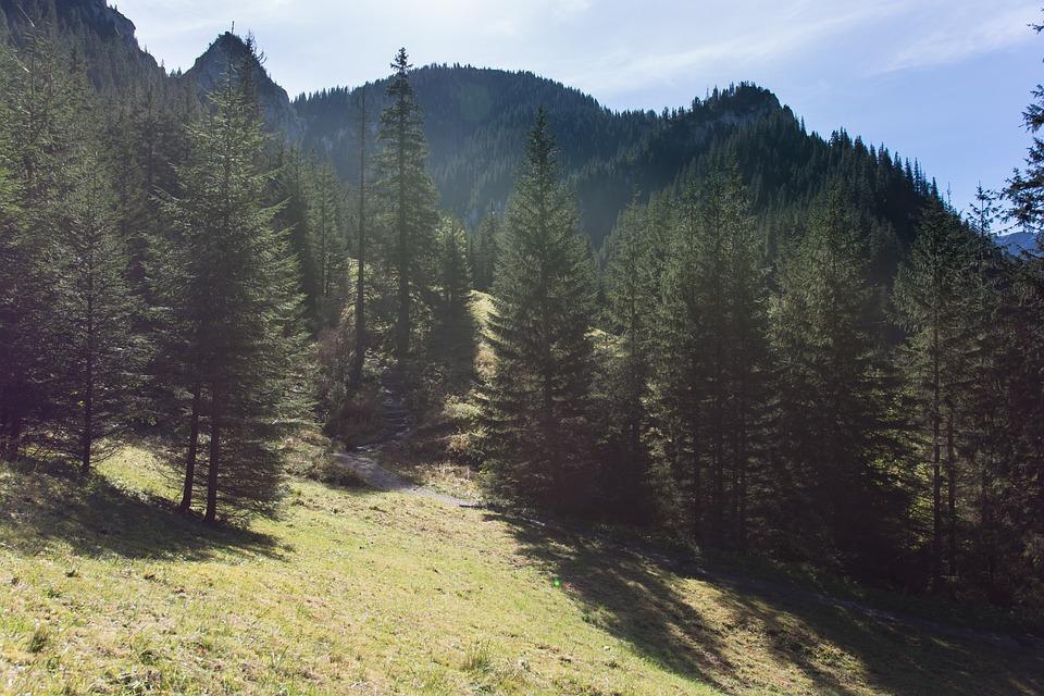 Tatry, Kościeliska Valley, Mountains, Landscape