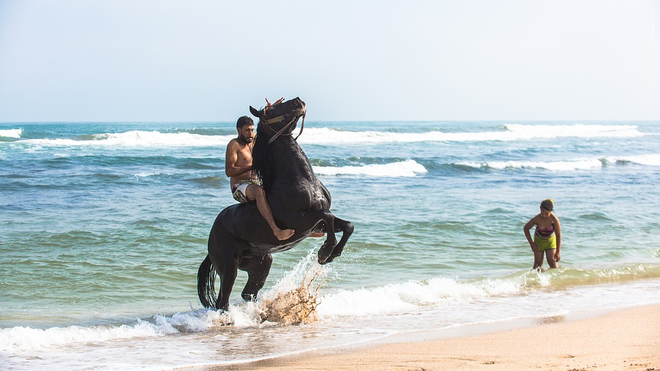Free photo Tbourida Horses Game Powder Fantasia Horse ...
