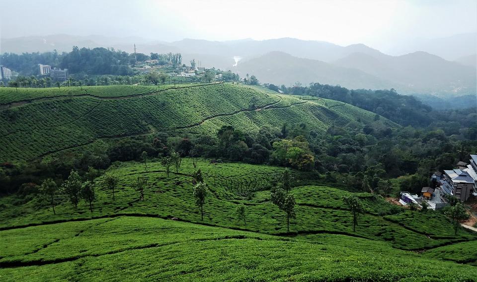 Munnar, India, Kerala, Tea, Plantation, Landscape