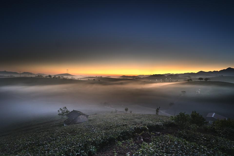 Farm, The Morning, Tea, Vietnam, Moc Chau, Nice