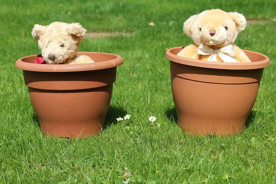 Teddy, Bear, Flowerpot, Lawn, Garden, Flower Pot