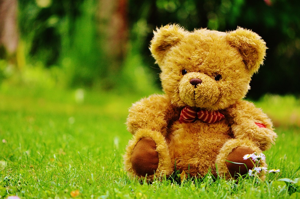 Teddy Bear, Bear, Bears, Stuffed Animal, Teddy, Cute