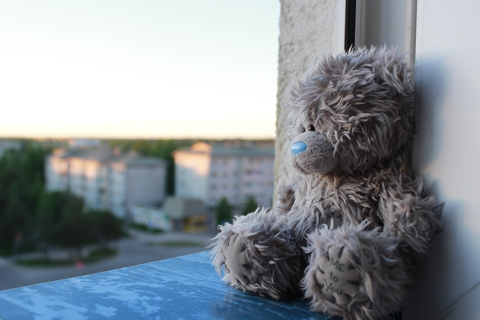 Window, Teddy, Bear