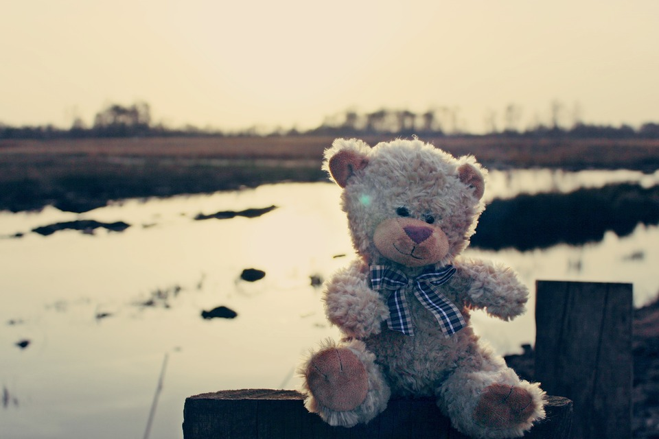 Teddy, Teddy Bear, Bear, Soft Toy, Bears