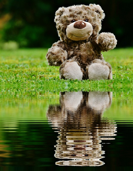 Teddy, Soft Toy, Mirroring, Water, Bank, Stuffed Animal