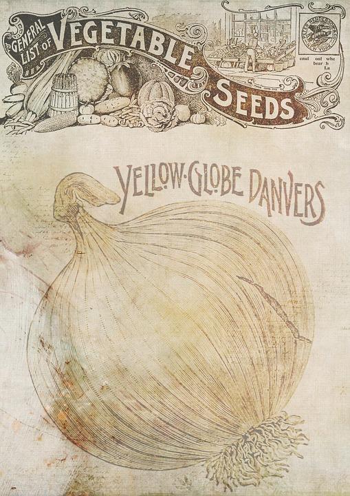 Background, Template, Onion, Vintage, Seeds, Vegetable
