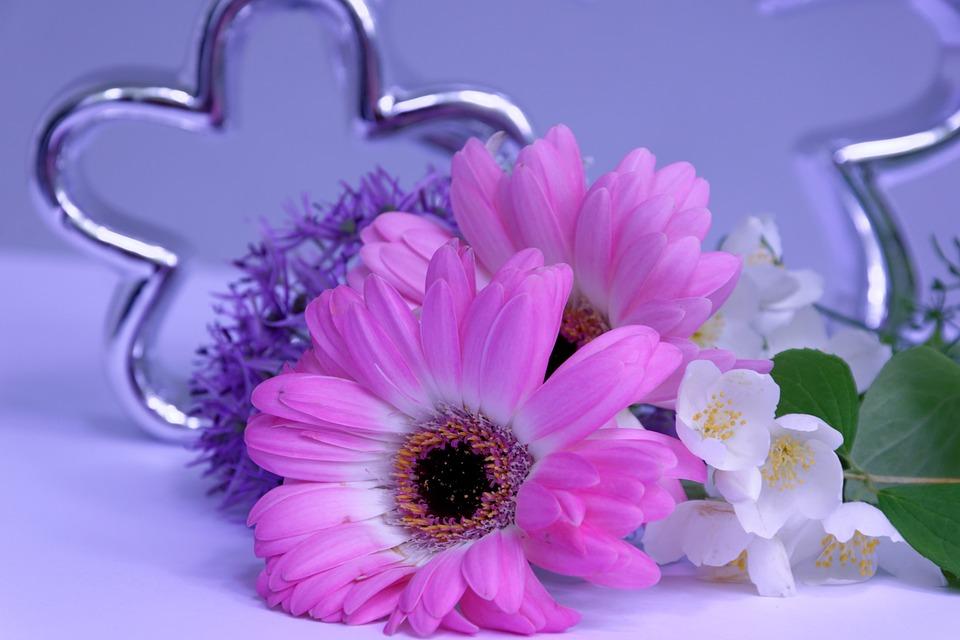 Flower, Blossom, Bloom, Tender, Gerbera, Fragrance