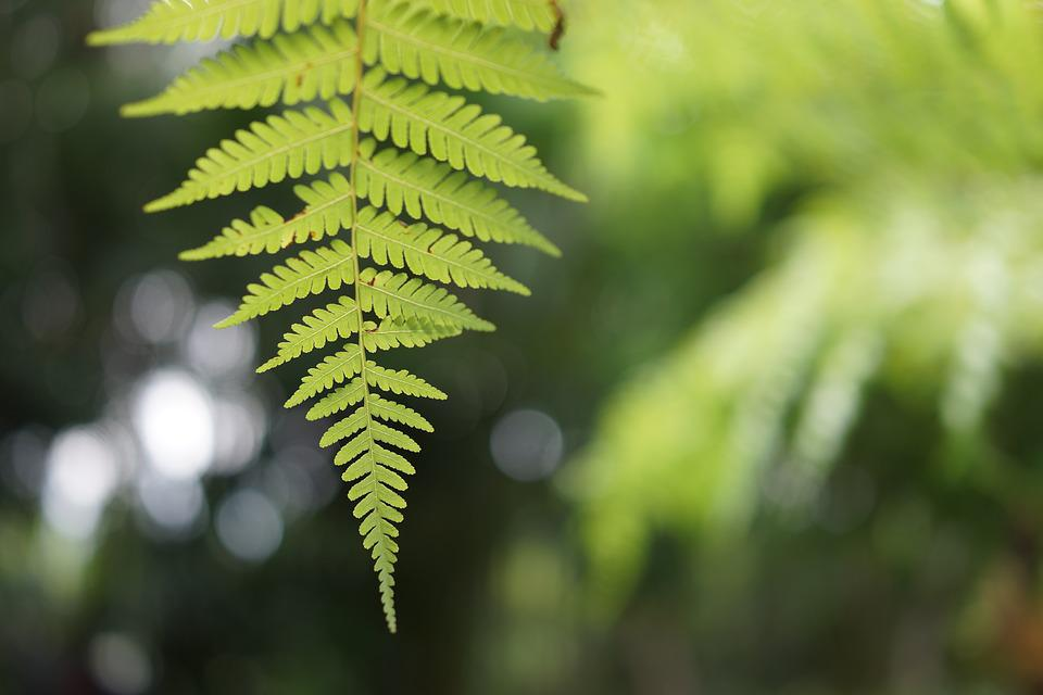 Fern, Tender, Natural, Foliage, Tropical, Wild