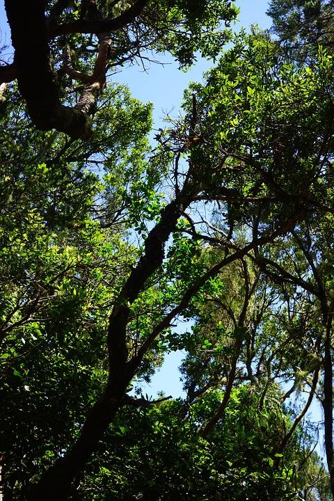Laurel Forest, Tenerife, Anaga Landschaftspark