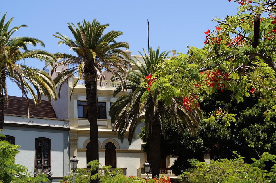Holiday, Santa Cruz, Tenerife, Tropical, Mediterranean