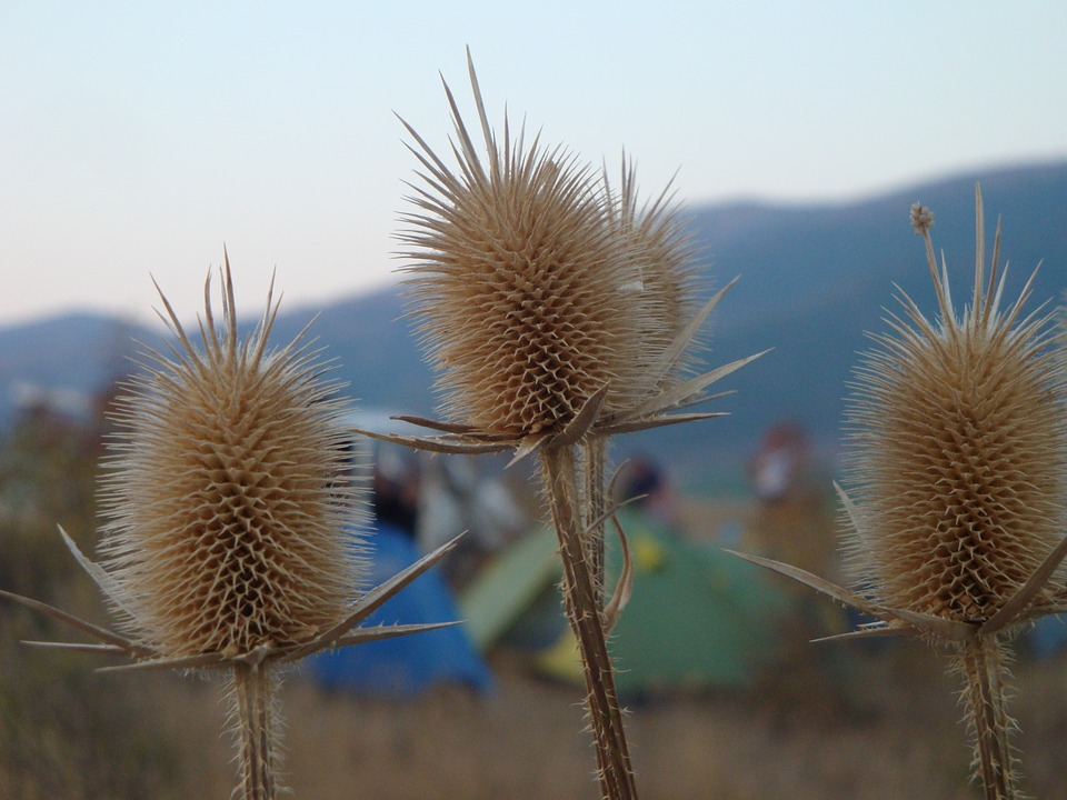 Camping, Tents, Gelendzhik, Mountains