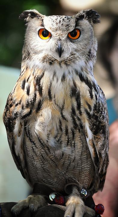 Owl, Medieval Market, Middle Ages, Historically, Tents