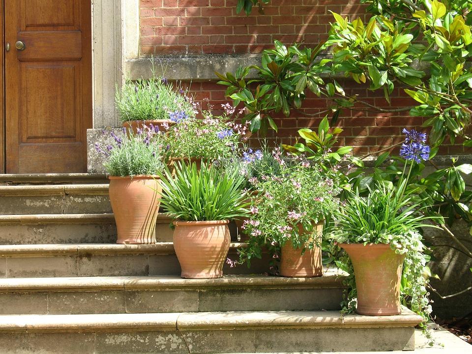 Plants, Pots, Terracotta, Plant Pot, Flowers, Steps