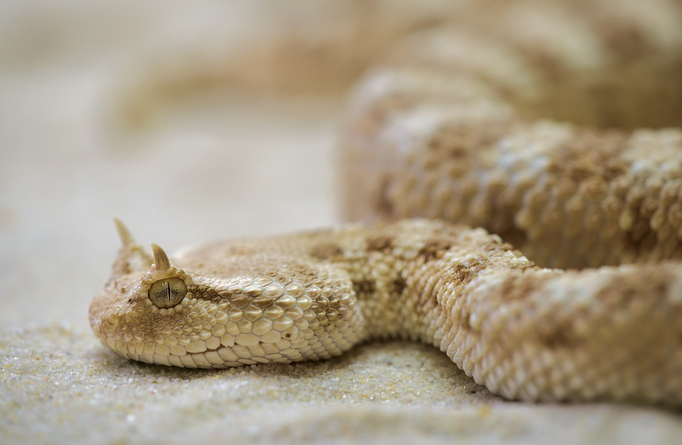 Snake, Terrarium, Toxic