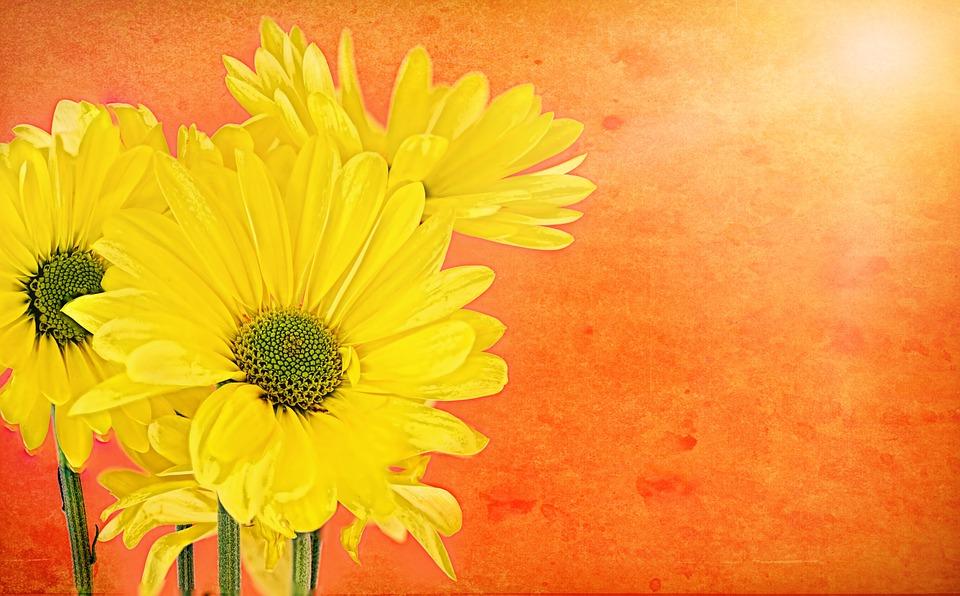 Daisies, Yellow, Orange, Text Space, Background, Border