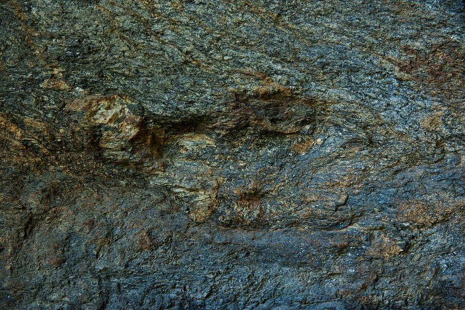 Texture, Wood, Bark