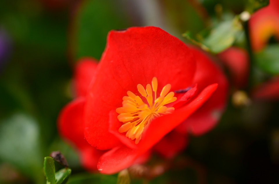 Nature, Garden, Flowers, Plant, Flora, Red, Texture