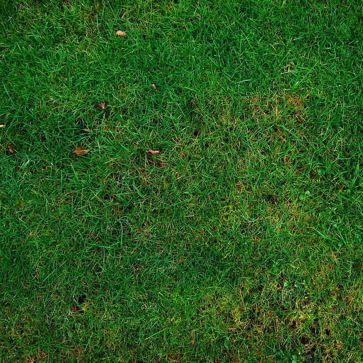 Meadow, Grass, Structure, Texture, Halme, Green