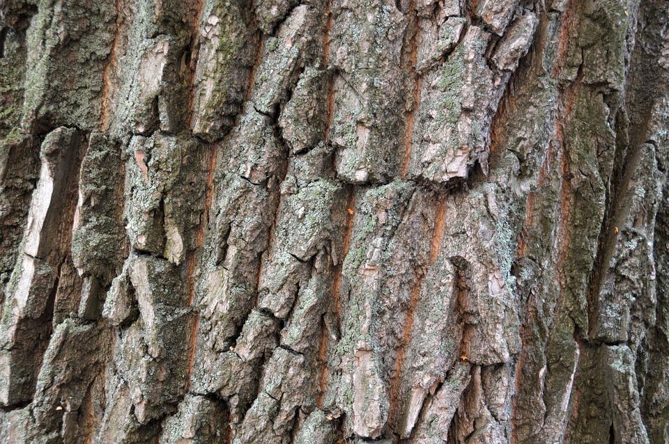 Invoice, Tree, Texture, Bark, Background, Trees, Relief