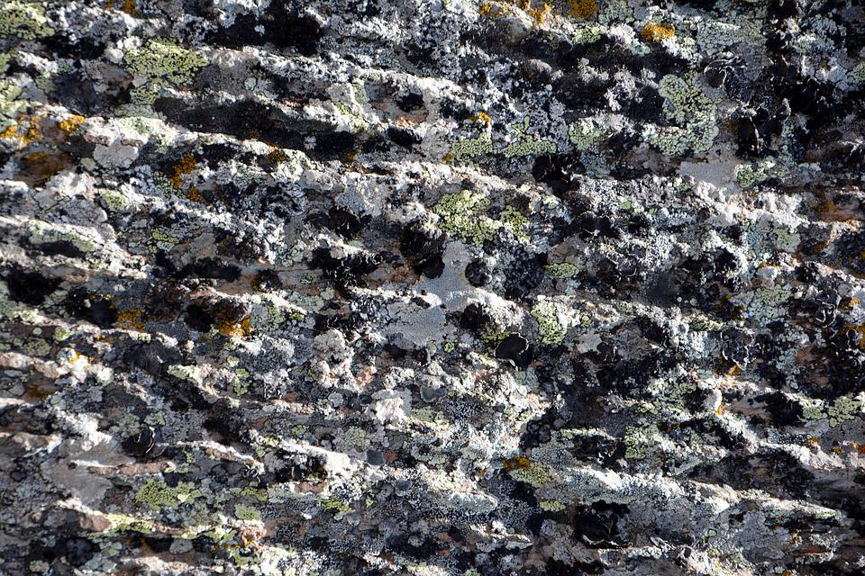 Kennedy, Stone, Texture, Macro, Nature, The Stones Are