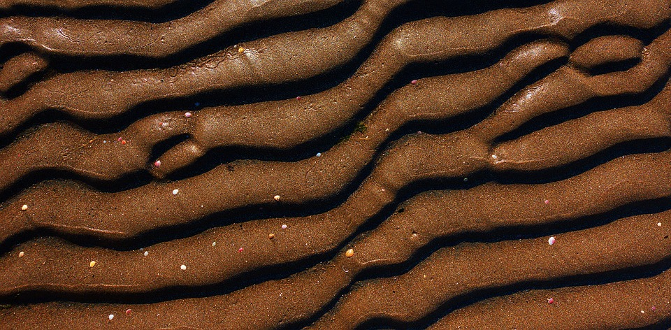 Sand, Mud, Brown, Ripple, Shell, Texture, Wave, Wavy