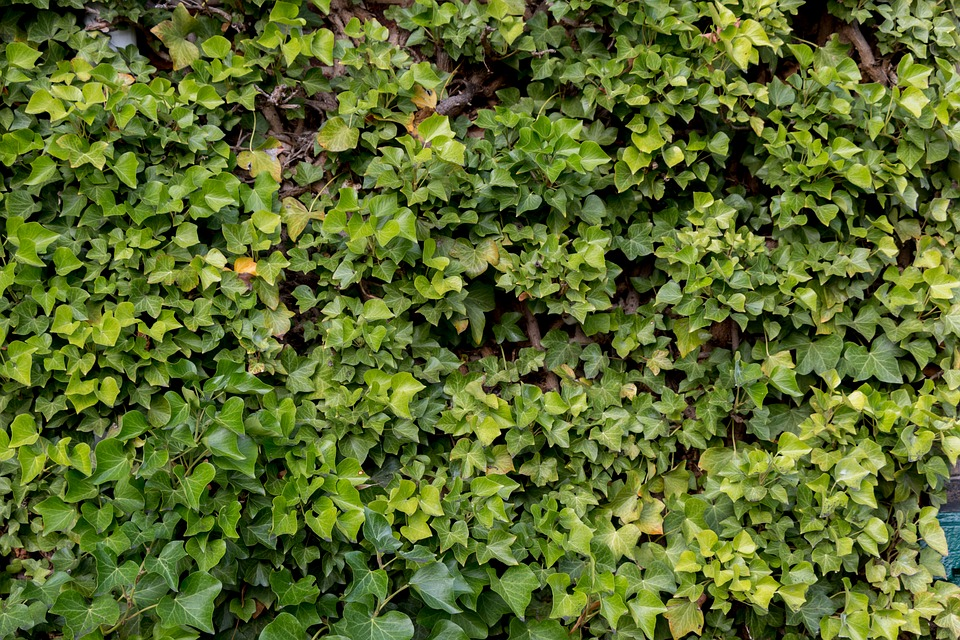 Background, Green, Nature, Pattern, Texture, Plant