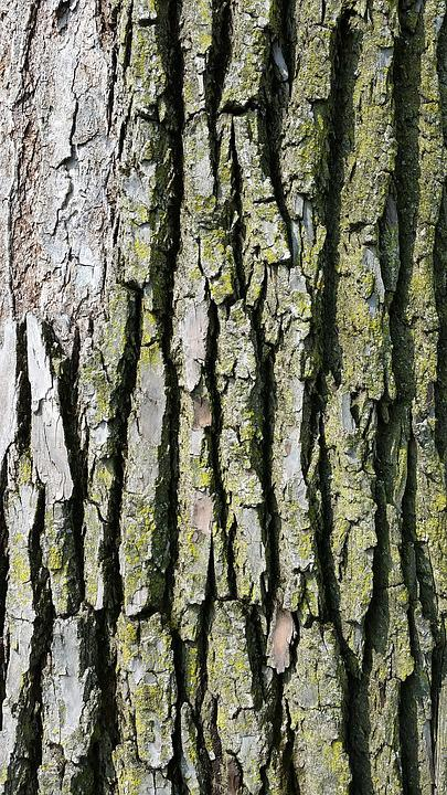 Tree Bark, Texture, Wood, Bark, Nature, Pattern