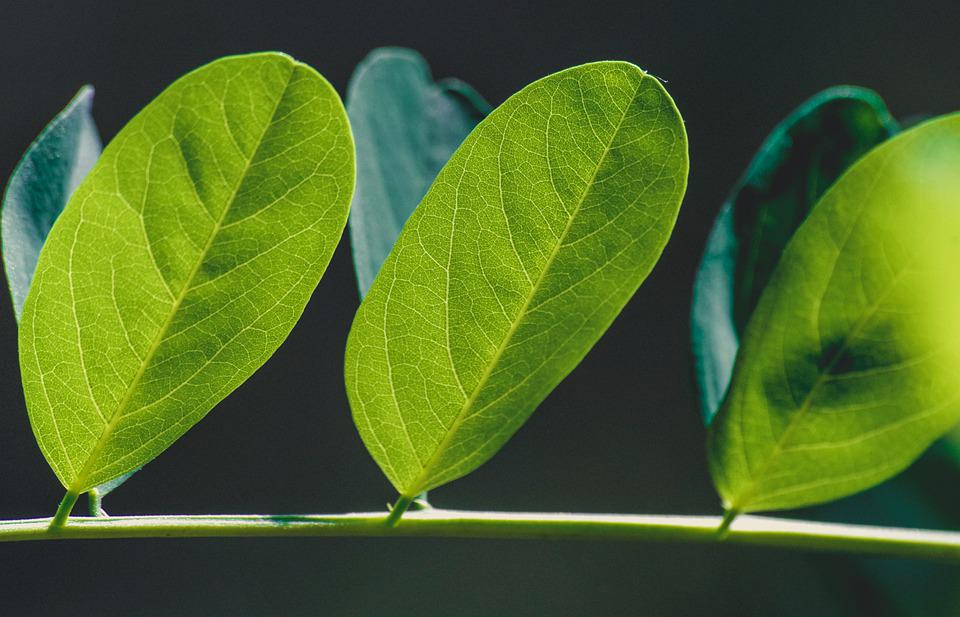 Free photo Texture Plant Leaves Pattern Green Background