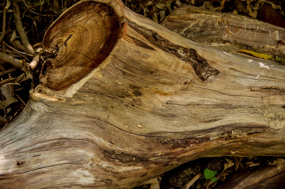 Wood, Tree, Trunk, Sawn, Timber, Texture, Brown
