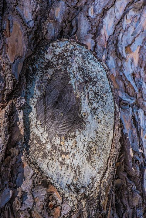 Free photo Tree Bark Rugged Weave Pattern Nature Wood - Max Pixel