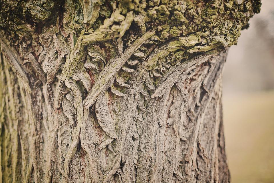 Tree, Tribe, Texture, Log, Wood, Bark, Nature