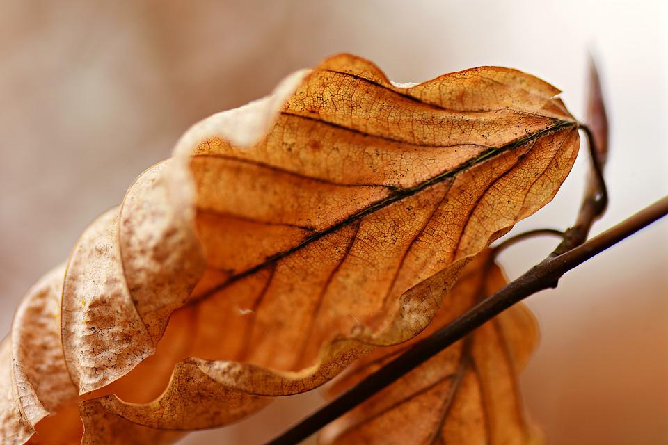 Leaf, Withered, Dry, Autumn, Vein, Pattern, Texture
