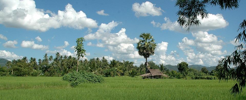 Thailand, Landscape, Rice, Forest, Nature, Summer