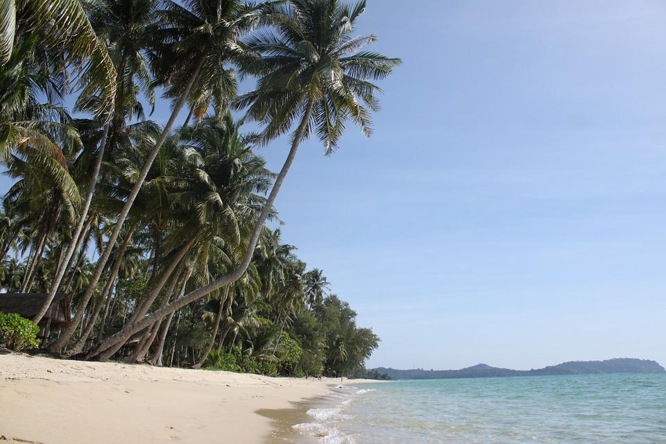 Palm Trees, The Island Of Koh Kood, Thailand, Beach