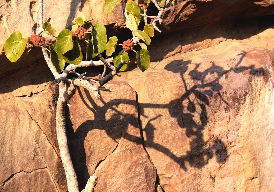 Nature, Shadow, Than Life Artist, Hispanic, Stone