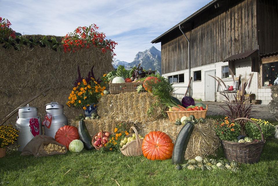 Thanksgiving, Fruits, Festival, Vegetables, Autumn