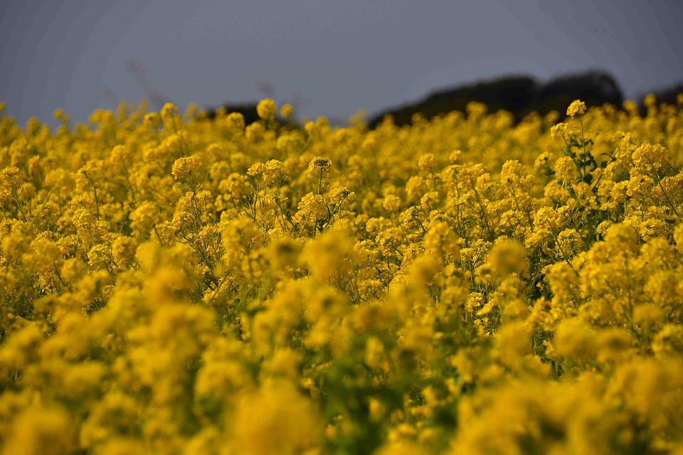 Field, The Agricultural Commercial Companies, Flowers