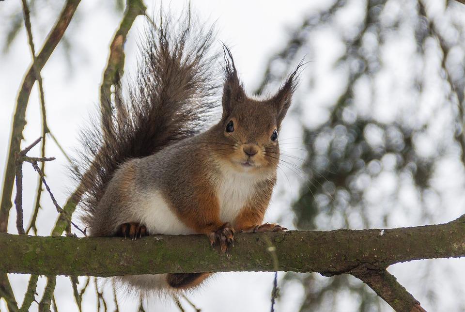 Tree, Mammals, Wild Animals, Nature, The Animal Kingdom