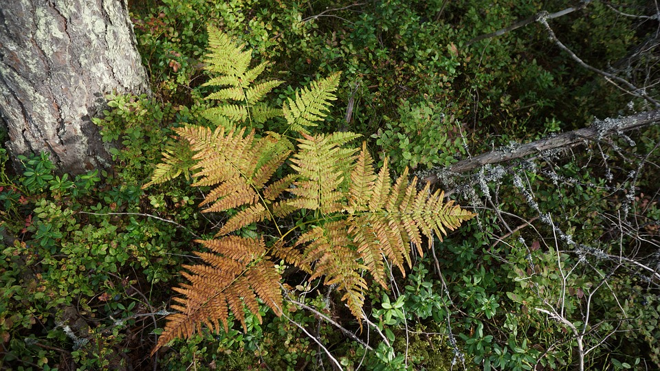 Fern, The Underbrush, The Autumn Colors In Nature