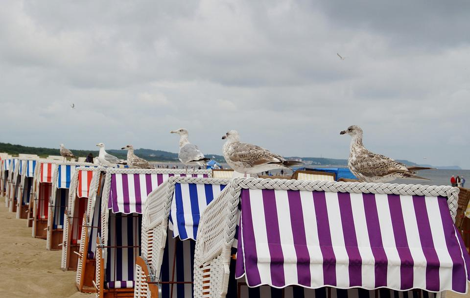 The Seagulls, Sea Bird, The Baltic Sea, Beach Baskets