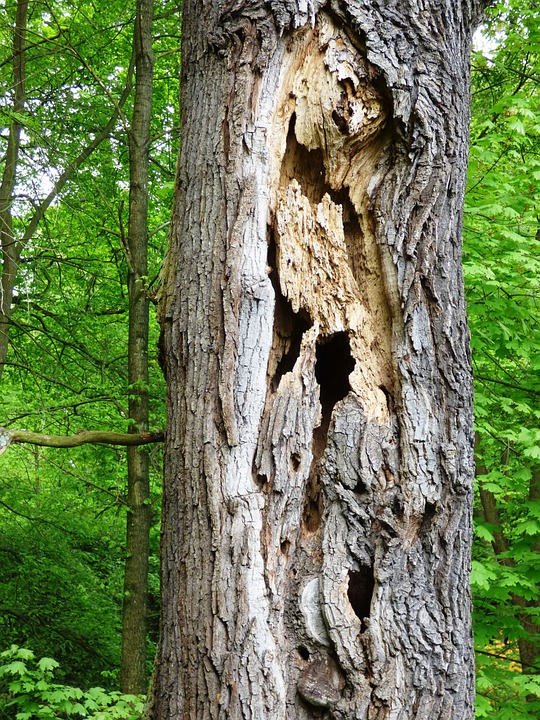 Tree, Holes, Destroyed, Trunk, Nature, Forest, The Bark