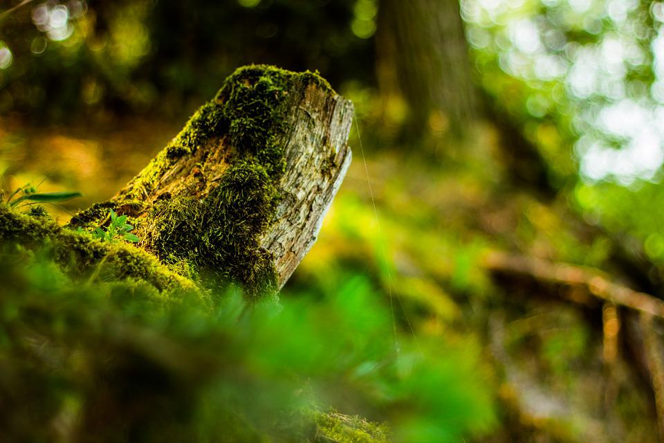 Tree, The Bark, Life, Nature, Forest