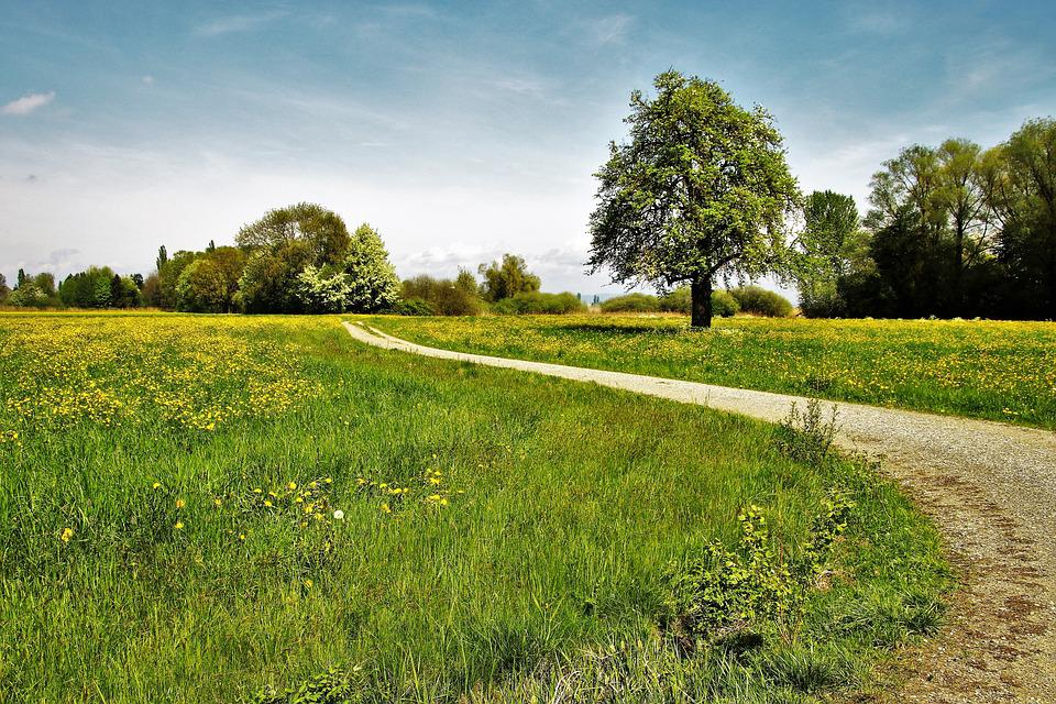 Spring, Way, The Beasts Of The Field, Spacer, Landscape