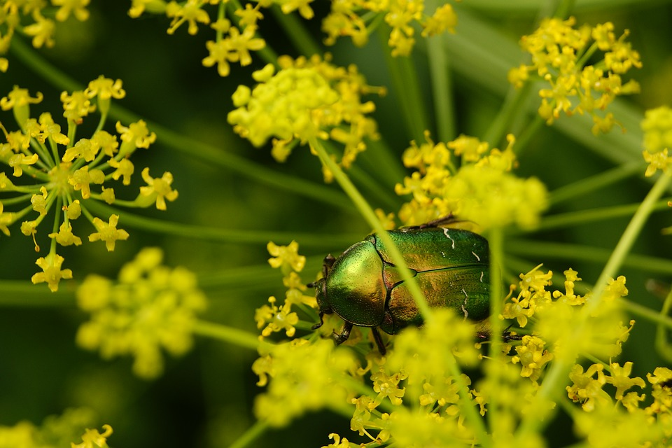Worm, Insect, The Beetle, Macro, Nature, Wings, Beetle