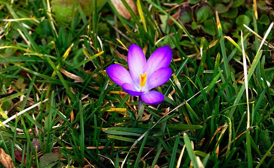 The Beginning Of Spring, Flower, Purple, Spring